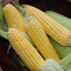 Sweetcorn F1 Earlibird 30 Seeds